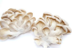 health benefits of oyster mushrooms