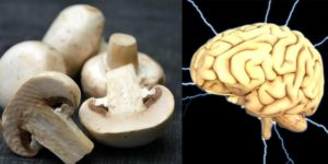 mushroom for brain health