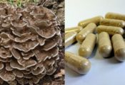 maitake capsule supplements