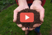 mushroom compost preparation at home